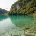"Lacs de Plitvice • <a style=""font-size:0.8em;"" href=""http://www.flickr.com/photos/56388541@N06/20179074630/"" target=""_blank"">View on Flickr</a>"