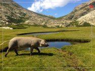 Les Pozzines du Val d'Ese (Bastelica)